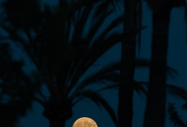 Superluna-en-altea-entre-palmeras